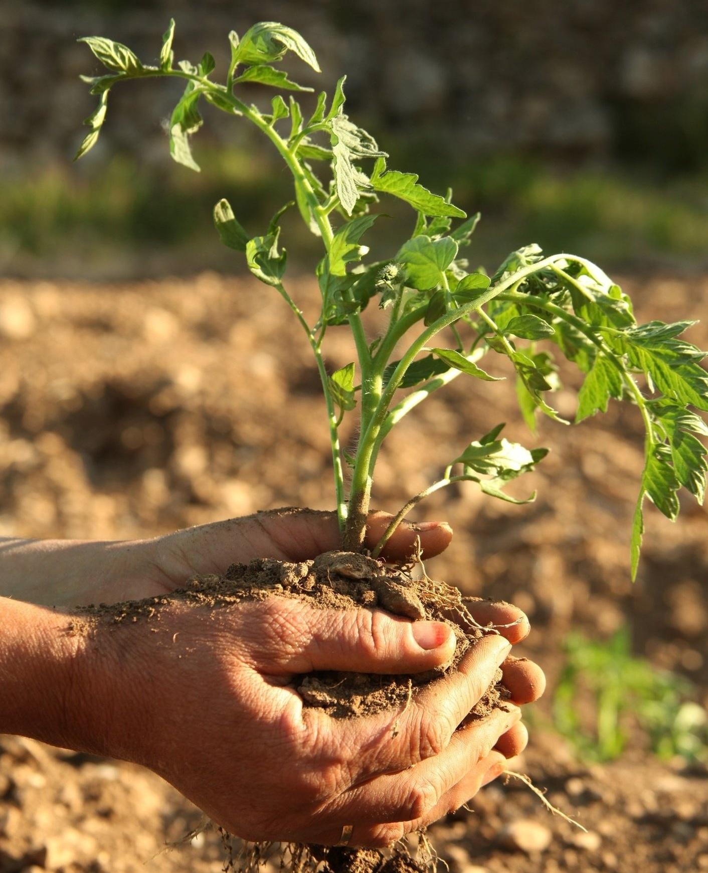 i-valori-del-settore-agroalimentare-biologico.jpg